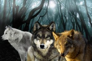 wolfs by MaGic-SaS