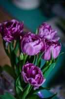Tulips_01 by Sangvinar