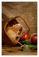 Parzifal 3 - Fancy rat - RIP by DianePhotos