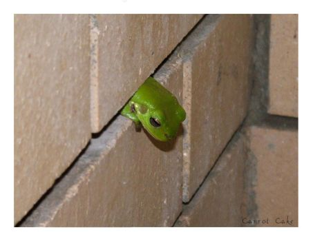 Froggy in the wall by carrotcake