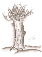 .. Tree .. by Shahenya