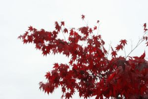 Red leaves by NHuval-stock