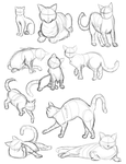 Cat Gestures by saraneth672