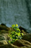 Life Finds a Way by rdswords