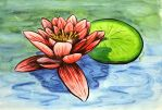 Water Lily by Lykorias