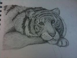 tiger, bad photograph by asimpleparadox