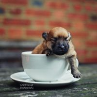 Baby in a Teacup by paintmewet