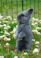 Baby Bunny, grey by felill