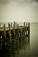 Birds on the Old Pier by Eternal-Polaroid