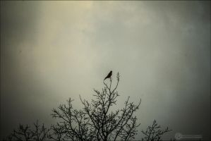 lonely pigeon by db-photoblogDOTcom
