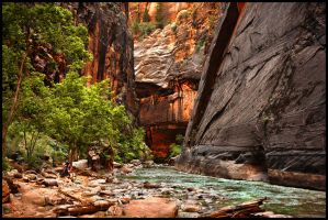 Contemplating Zion's Beauty by kimjew