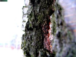 Tree bark by MannyDiax