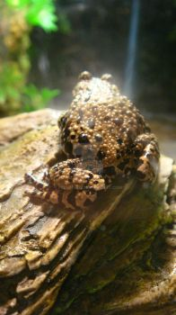Frog 2- Wide 2 by Flemhead