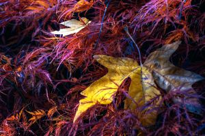Untitled Fall complete by UrbanRural-Photo