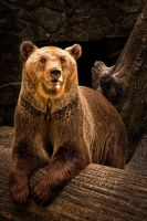 Bearsome by beregond3019