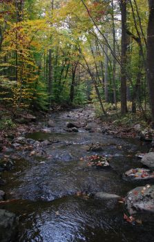 Autumns river by thebcmc