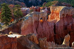 Bryce Canyon Morning Light by La-Vita-a-Bella