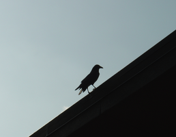 Crow on Roof by unseeliefae