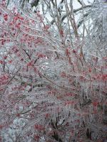 Icy Conditions046 by effing-stock