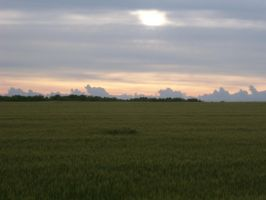 wheat field and cloudy sky by Sir-Max671