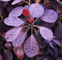Purple Plant by Aderes-Devorah