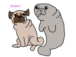 pug and manatee by For-blood-and-glory