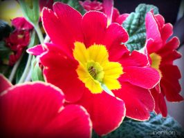 Spring Flower 2012 - 18 by Ingnition
