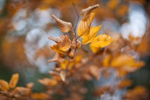 Signs of Autumn by Quit007