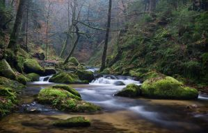 Crooked trees and water by erynlasgalenphotoart