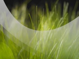 Vista Grass Clear by Chico47