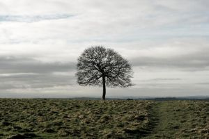 lonely tree by AnniesASeagull