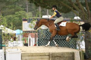 Bay Warmblood Jumpers Pebble Beach by HorseStockPhotos