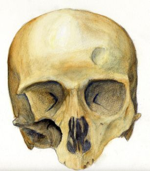 Yet again, Skull by uximata