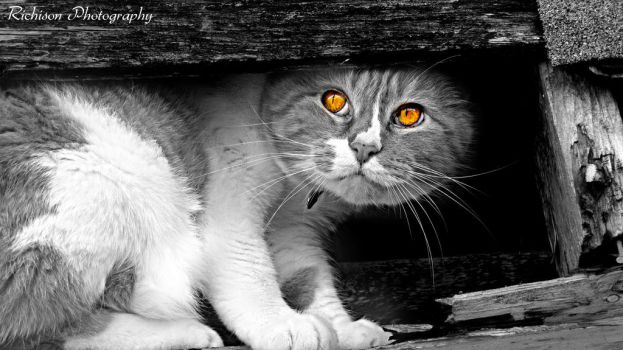 Orange eyes by halestorm1981