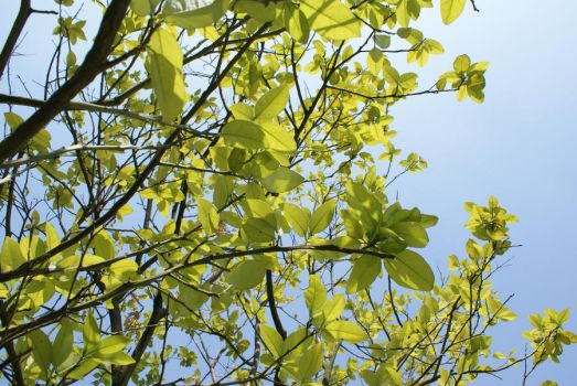 leaves with blue sky by ufo-circle