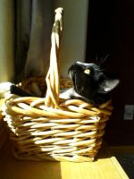 Cat in a Basket by LadyClona