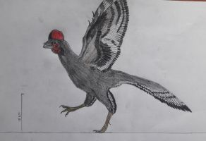 Inaccurate Anchiornis huxleyi by paleosir