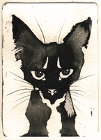 Ink Cat 1 by Myrntai