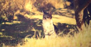sunny cat by sys66
