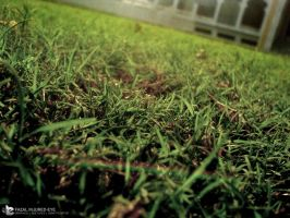 Grass Focusing Photography by injured-eye