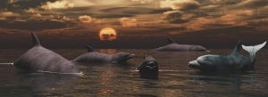 Dolphins by fractal2cry