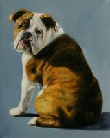 Bulldog by AGillustration