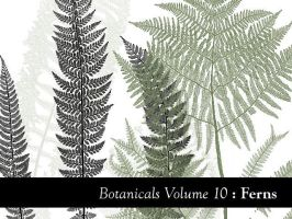 Botanicals Volume 10 - Ferns by remittancegirl