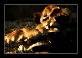 Fungi 3 by ColetasSoft