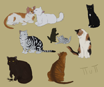 cats of all shapes and sizes by ForlornPuppy