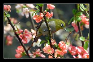 White-eye in the Park 1 by Keith-Killer