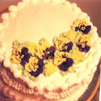 pansies for spring by peaceocake