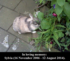 In loving memory: Sylvia. by MarvelscaleMilotic
