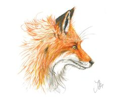 Fox by wuselbonham