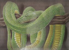 Emerald Tree Boa by Lycanthrope818